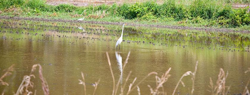 Vermilion Parish Birding
